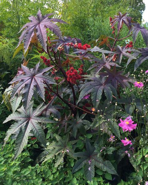plants that don t require sunlight 100 plants that don t require sunlight rhubarb