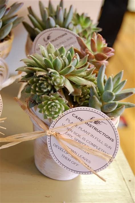 dinner guest gift 17 best ideas about succulent party favors on pinterest