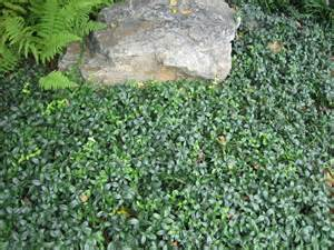 landscaping ground cover ideas ground cover landscaping newsonair org
