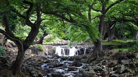 Foster Botanic Garden Awesome Botanical Gardens Hawaii Foster Botanical Garden Aloha Hawaii Gardensdecor