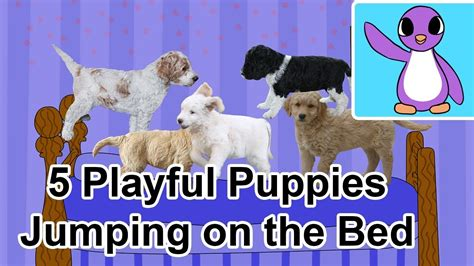 five puppies jumping on the bed 5 playful puppies jumping on the bed bright new day productions