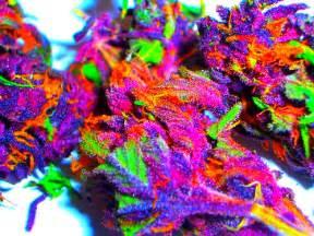 colorful marijuana the human element