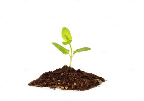 tiny plants tiny baby plant birth grow concept business photos on