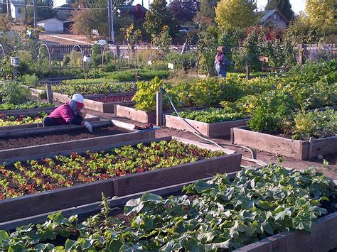 seattle setting   community gardens nationwide