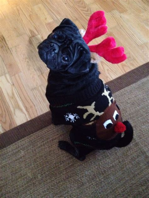 pug reindeer costume 17 best images about fabulous pug costumes on costumes