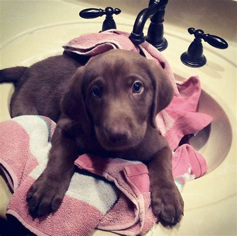 when can you shower a puppy shower time in cold weather wishforpets