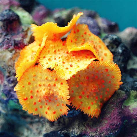Soft Aquarium mocrux artificial undersea soft coral aquarium decoration