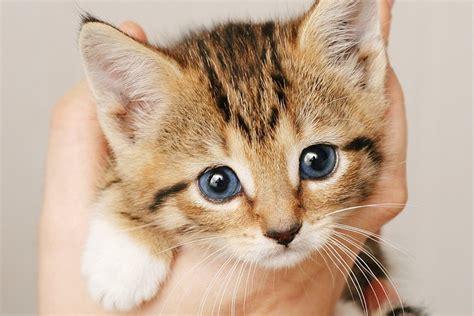 gatti alimentazione svezzamento gattini allattamento e alimentazione