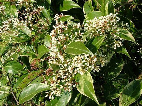 Obat Tipes Herbal Berkhasiat Tanpa Efek Sing obat herbal kolesterol the knownledge