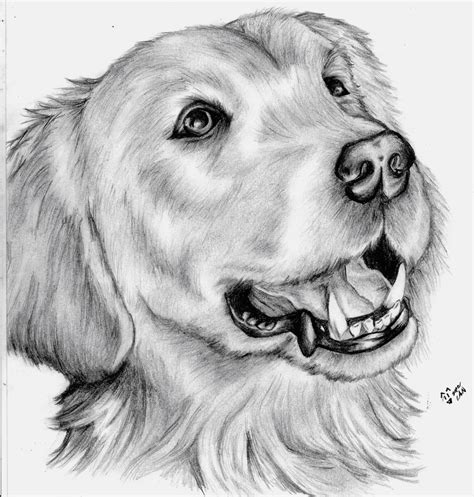 imagenes a lapiz de animales dibujos de amor dibujo de amor a lapiz