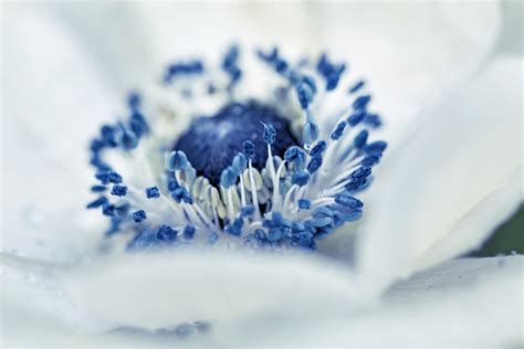 my blue my blue by sarahharas1 on deviantart