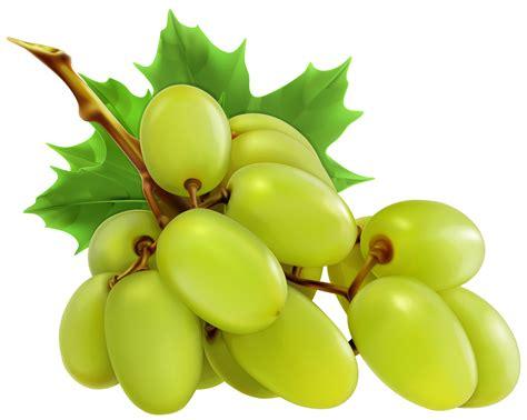 fruit 08 grape grapes grape clipart grapeclipart fruit clip photo