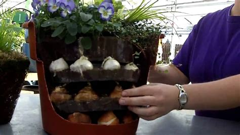 planting tips for bulbs in a container youtube