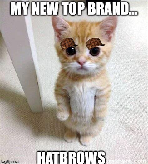 My Brand Meme - cute cat meme imgflip