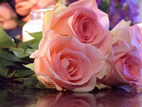 imagenes rosas en hd flores rosas 1440x1080 fondo de pantalla 2603