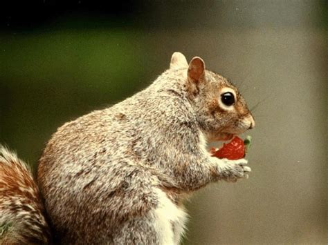 what do squirrels eat what our furry little friends