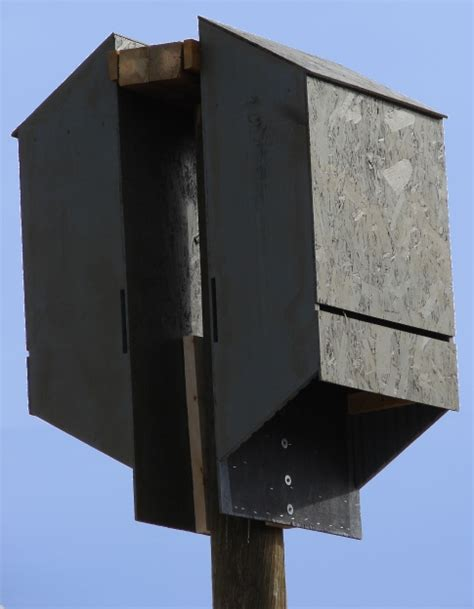 bat house placement bat house installation usa worldwide the bird man