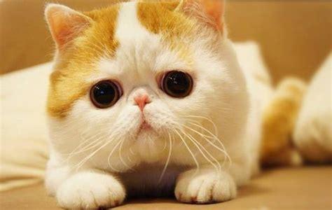 film anime terlucu ini dia snoopy baby kucing terlucu di dunia wow nya dong