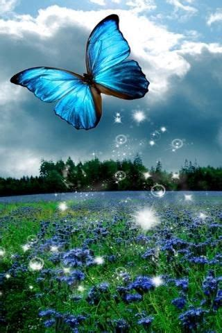 3d Live Wallpaper To by 3d Butterfly Wallpaper 3d Butterfly Live