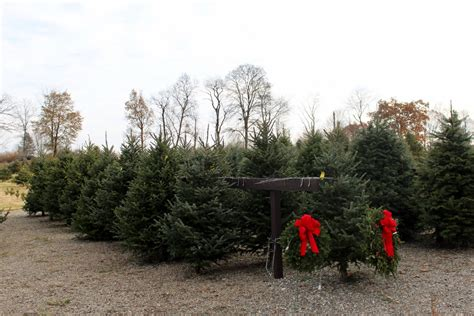 christmas tree picking in the hudson valley the