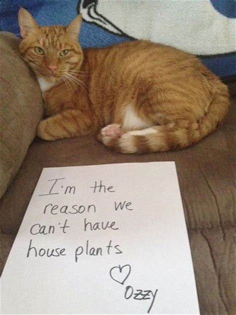 best of cat best of quot cat shaming quot 26 pics