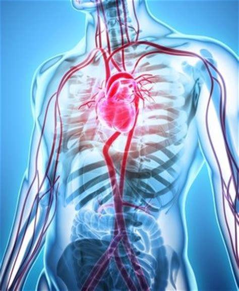 Angiologie Gesunde Arterien Venen Und Lymphgef 228 223 E