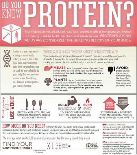 protein building blocks protein the building blocks of your visual ly