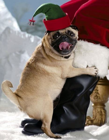 dogs in costumes top 10 festive dogs in costumes