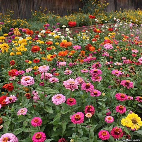 Zinnia Flower Garden Zinnia Elegans Seed Mix American