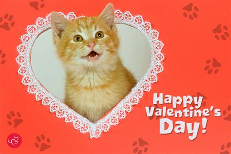 happy valentines day cat valentines day quotes with kittens quotesgram