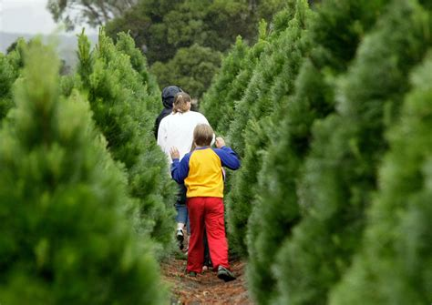 christmas tree farms near washington dc
