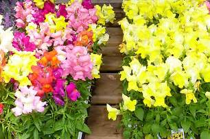 creating flower beds that bloom all summer livebetterbydesign s blog