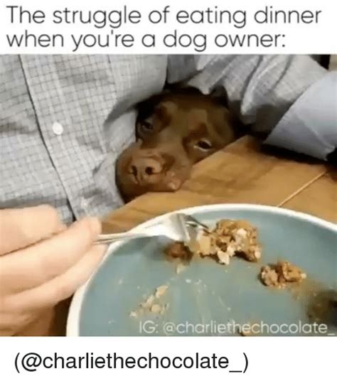 the struggle of eating dinner when you re a dog owner g