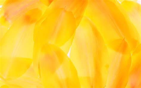 best yellow cool yellow background wallpapersafari