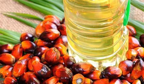 Minyak Goreng Nabati ilmuwan ipb minyak goreng sawit paling sehat dibanding