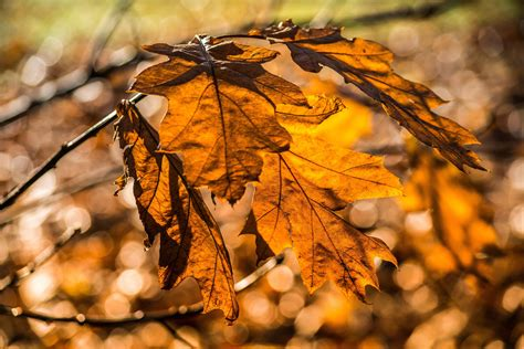picture flora brown tree autumn dry leaf