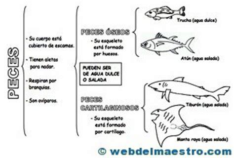 cuales son las cadenas mas faciles de poner animales vertebrados peces web del maestro