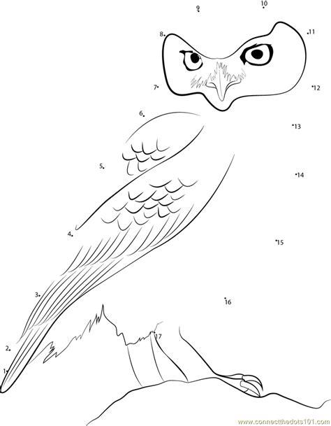 owl dot to dot printable little owl dot to dot printable worksheet connect the dots