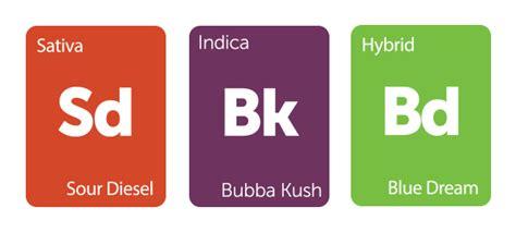 blurple color code nasiona marihuany blog nasionbank pl
