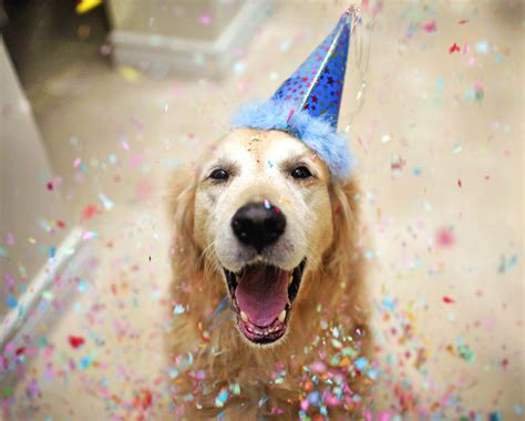new year animal birthday animal 41 52 flickr12days today october 11th is
