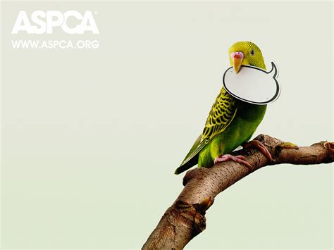 Olay Free Sle by Aspca Wallpaper