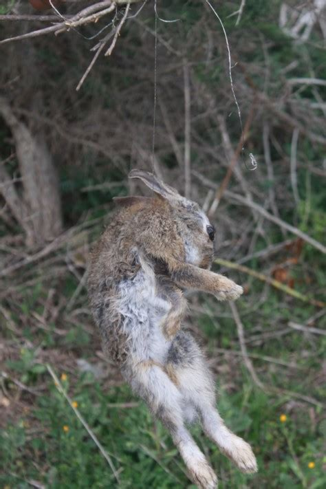 come si chiama la gabbia dei conigli vallevegan l a fattoria degli animali liberi free