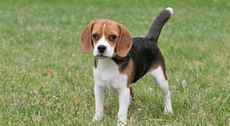 selling dog breeds   world  top  list