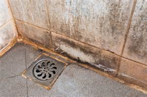 remove mold from the shower remove mold guide