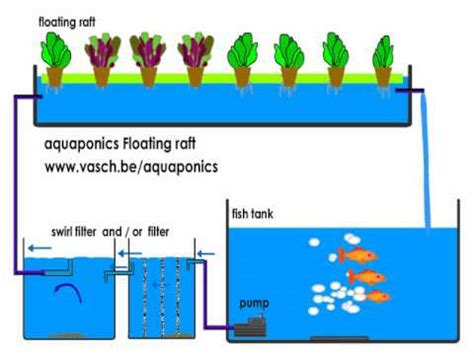 Floating Bed Designs by Aquaponics Floating Raft System Youtube