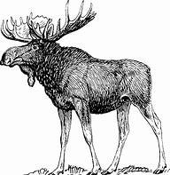 Image result for Elk Horn Lodge