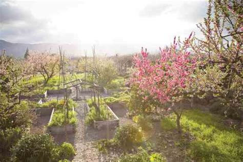 small backyard orchard fruit orchard design for small spaces organic gardening