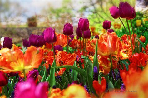 images of arbre en fleur photo paysage le