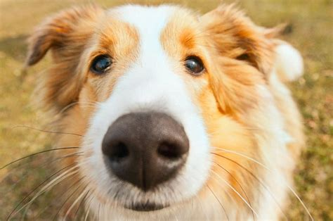 sniffing dogs sniffing out ovarian cancer working dogs help in the war on cancer with their