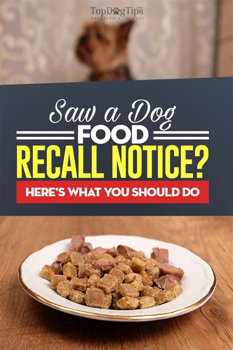Pet Food Recall by Food Recall What It Means And What You Must Do Top